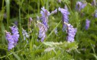 Purple Flowers In Vine 10 Widescreen Wallpaper