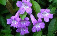 Purple Flowers In Vine 13 Widescreen Wallpaper