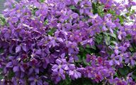 Purple Flowers In Vine 7 High Resolution Wallpaper