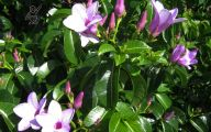 Purple Flowers In Vine 8 Free Wallpaper