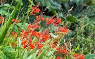 Red Flowers In Castle 7 Free Wallpaper
