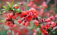 Red Flowers In May 15 Cool Hd Wallpaper