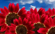 Red Flowers In May 25 Widescreen Wallpaper