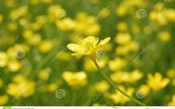 Small Yellow Flowers 27 High Resolution Wallpaper