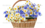 White Flowers In Basket 14 Cool Hd Wallpaper
