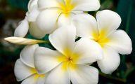 White Flowers Paintings 14 Hd Wallpaper