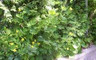 Yellow Flowers Photo Album 18 Desktop Wallpaper