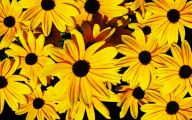 Yellow Flowers Photo Album 27 Desktop Background