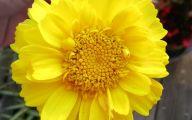 Yellow Flowers Photo Album 28 Background Wallpaper