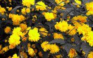 Yellow Flowers Photo Album 29 Background Wallpaper