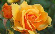 Yellow Flowers Photo Album 4 High Resolution Wallpaper