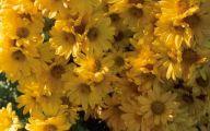 Yellow Flowers Photo Album 6 Widescreen Wallpaper