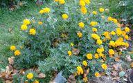 Yellow Flowers Photo Album 8 Free Hd Wallpaper