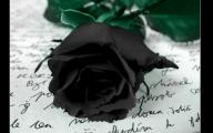 Black Flower 1675 Free Wallpaper