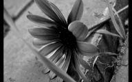 Black Flower 1678 Background Wallpaper