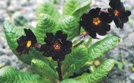 Black Flower 1679 Free Hd Wallpaper