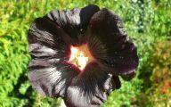 Black Flower 1680 Background Wallpaper
