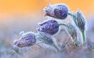 Winter Flower 19 Free Hd Wallpaper