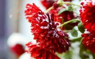Winter Flower 2 Wide Wallpaper