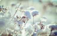 Winter Flower 21 High Resolution Wallpaper