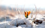 Winter Flower 3 Cool Hd Wallpaper