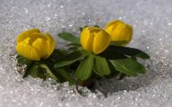 Winter Flower 5 Free Hd Wallpaper