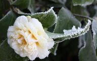 Winter Flower 6 High Resolution Wallpaper