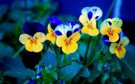 Winter Flower 7 Hd Wallpaper