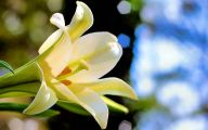 Easter Flower 28 Hd Wallpaper