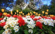 Easter Flower 3 Desktop Background