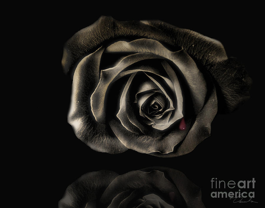 Black Roses For Sale 24 Desktop Wallpaper