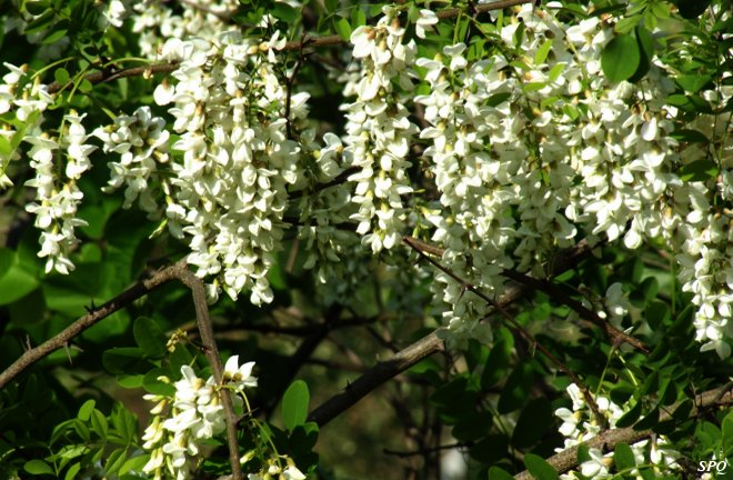 Flowering trees with white flowers images flower decoration ideas blooming white flowers 22 high resolution wallpaper blooming white flowers background mightylinksfo mightylinksfo