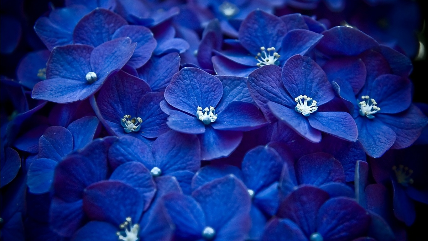 Blue Flowers 89 High Resolution Wallpaper