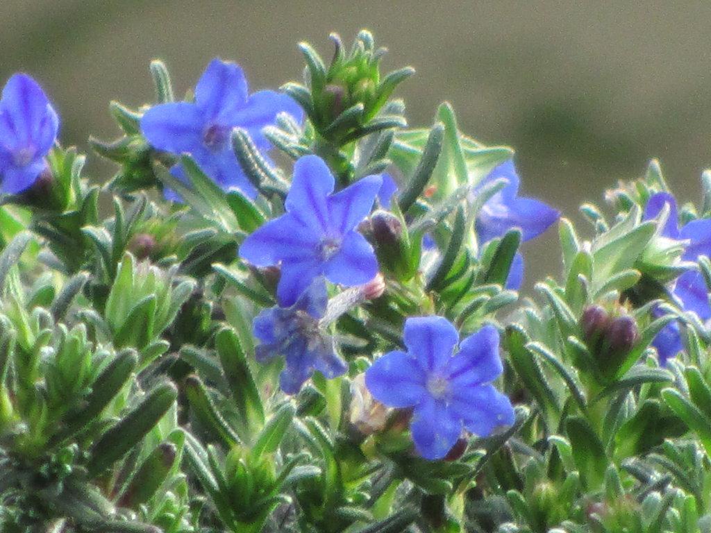 Blue Flowers Names 22 Wide Wallpaper