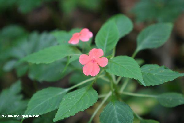 Common Pink Flowers 27 Free Wallpaper