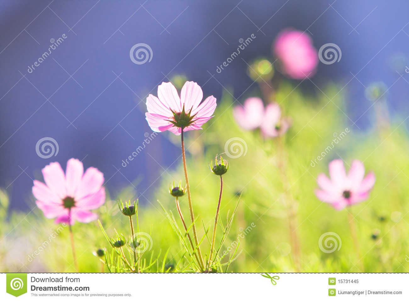 Common Pink Flowers 3 Hd Wallpaper