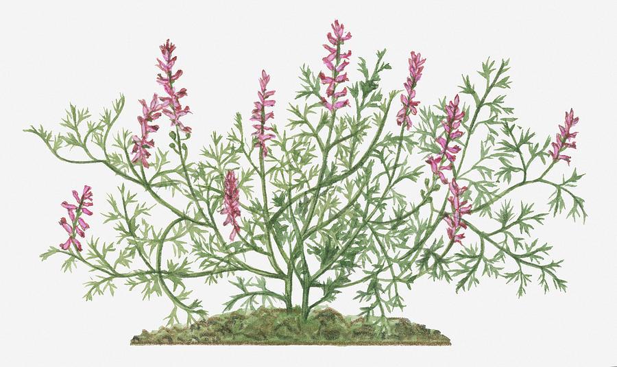Common Pink Flowers 35 Desktop Wallpaper