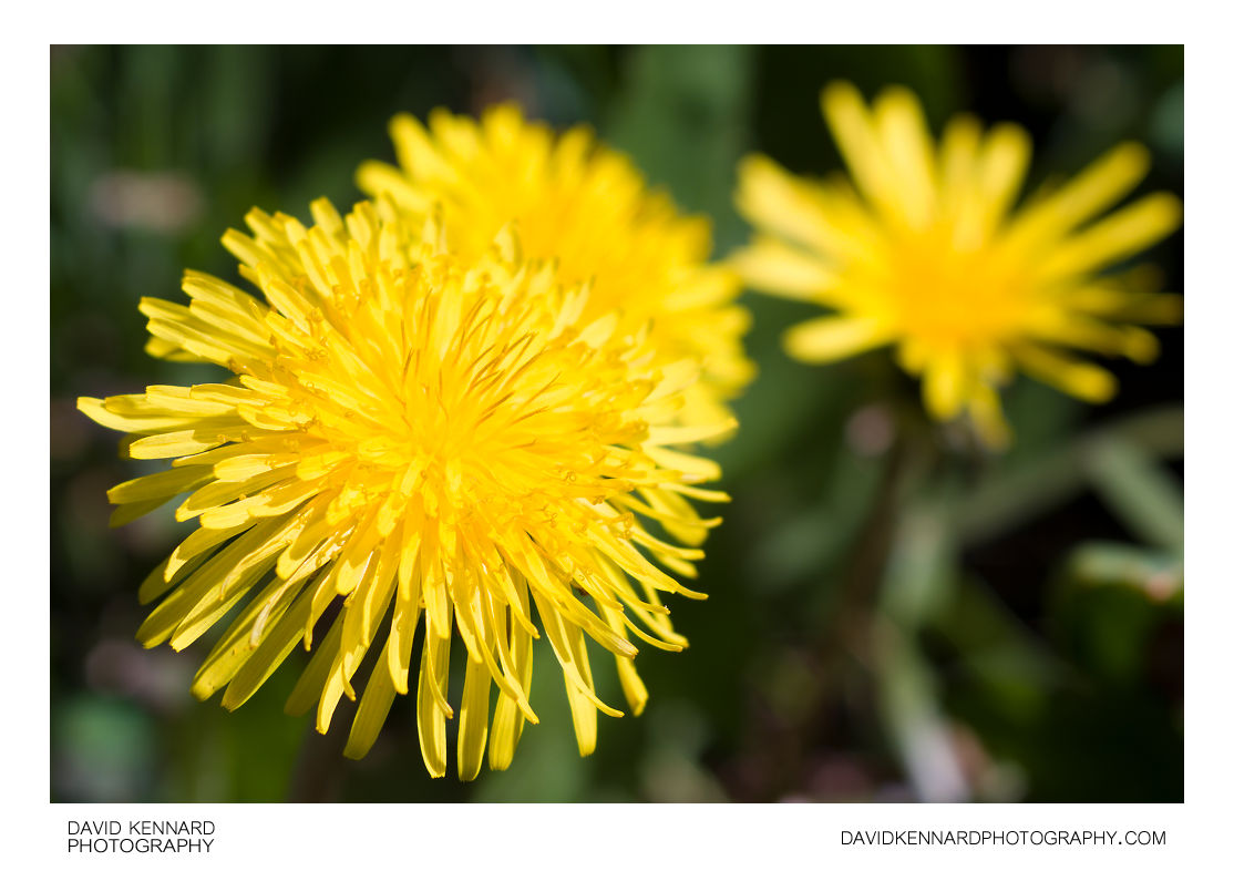 Common Yellow Flowers 13 Hd Wallpaper