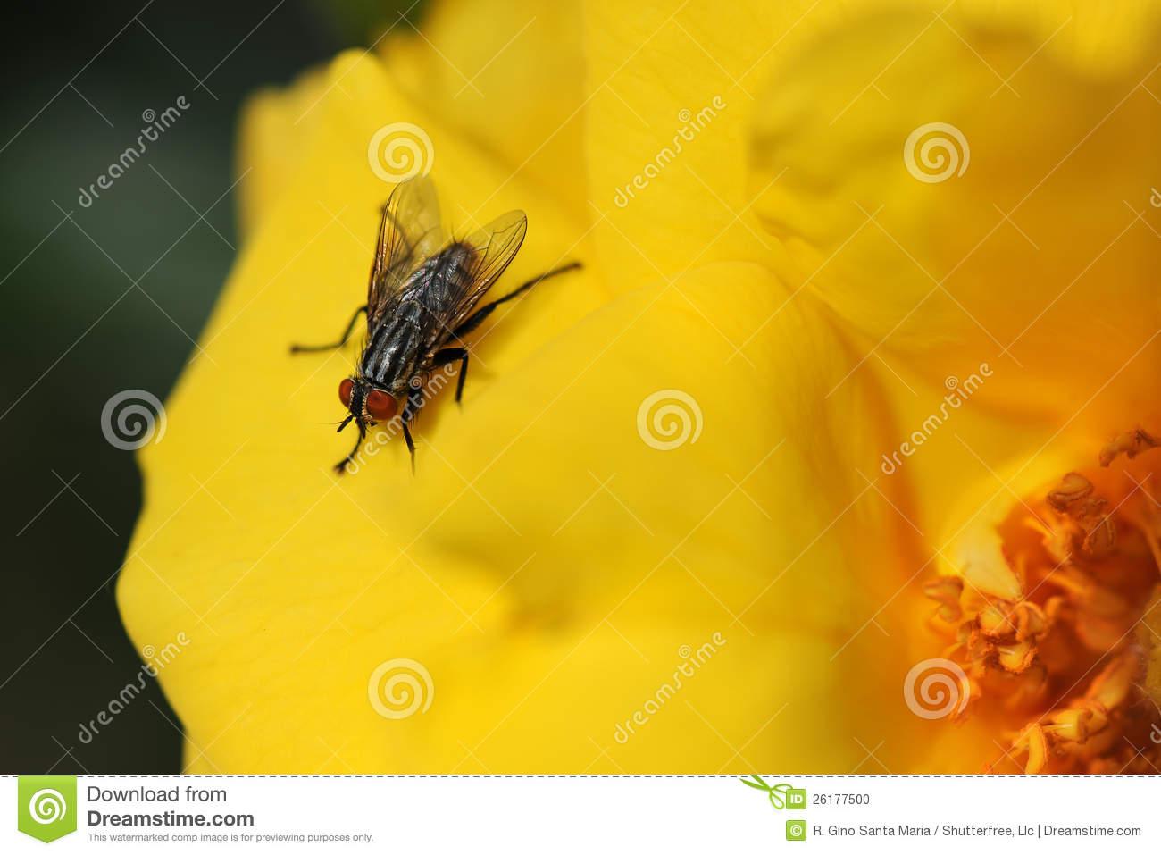 yellow wallpaper 33 - photo #30