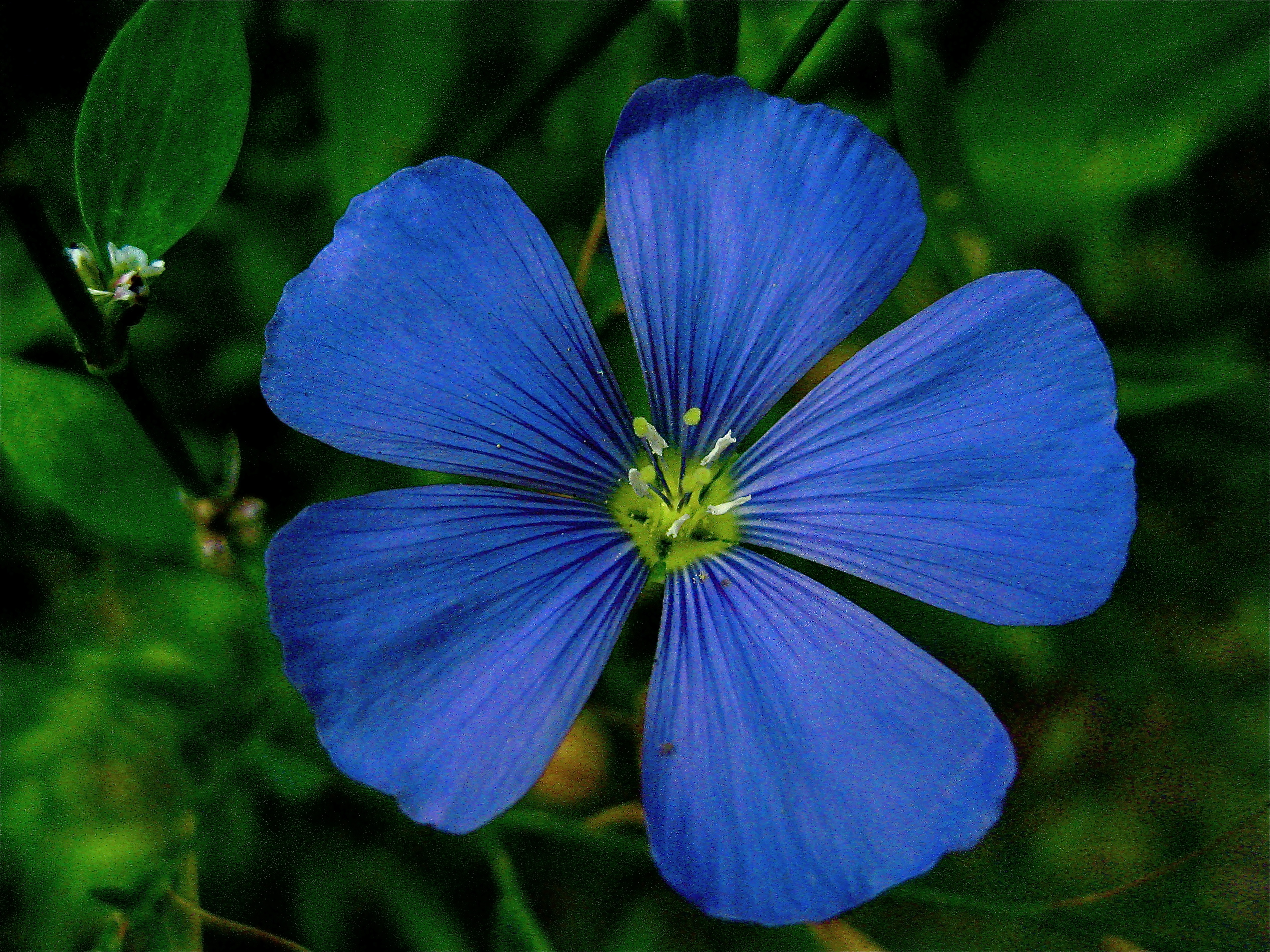 List of blue colored flowers 21 high resolution wallpaper list of blue colored flowers widescreen wallpaper izmirmasajfo Gallery