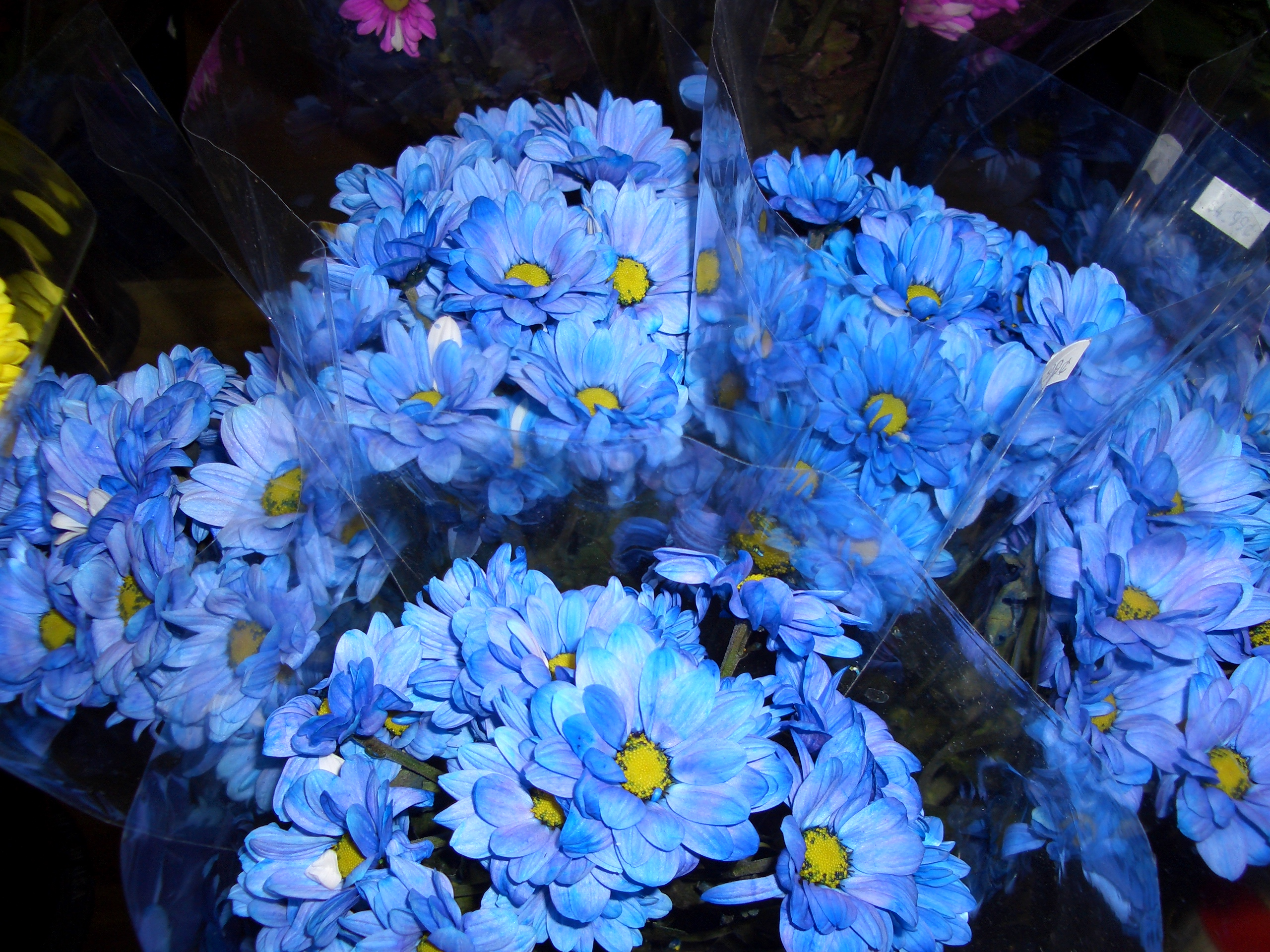 List of blue colored flowers 8 cool hd wallpaper hdflowerwallpaper list of blue colored flowers desktop background izmirmasajfo