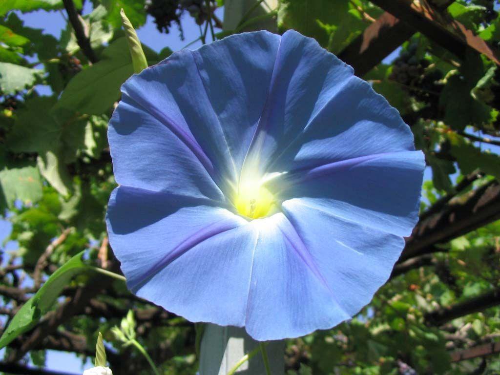 List of blue flowers 9 widescreen wallpaper hdflowerwallpaper list of blue flowers widescreen wallpaper izmirmasajfo Gallery