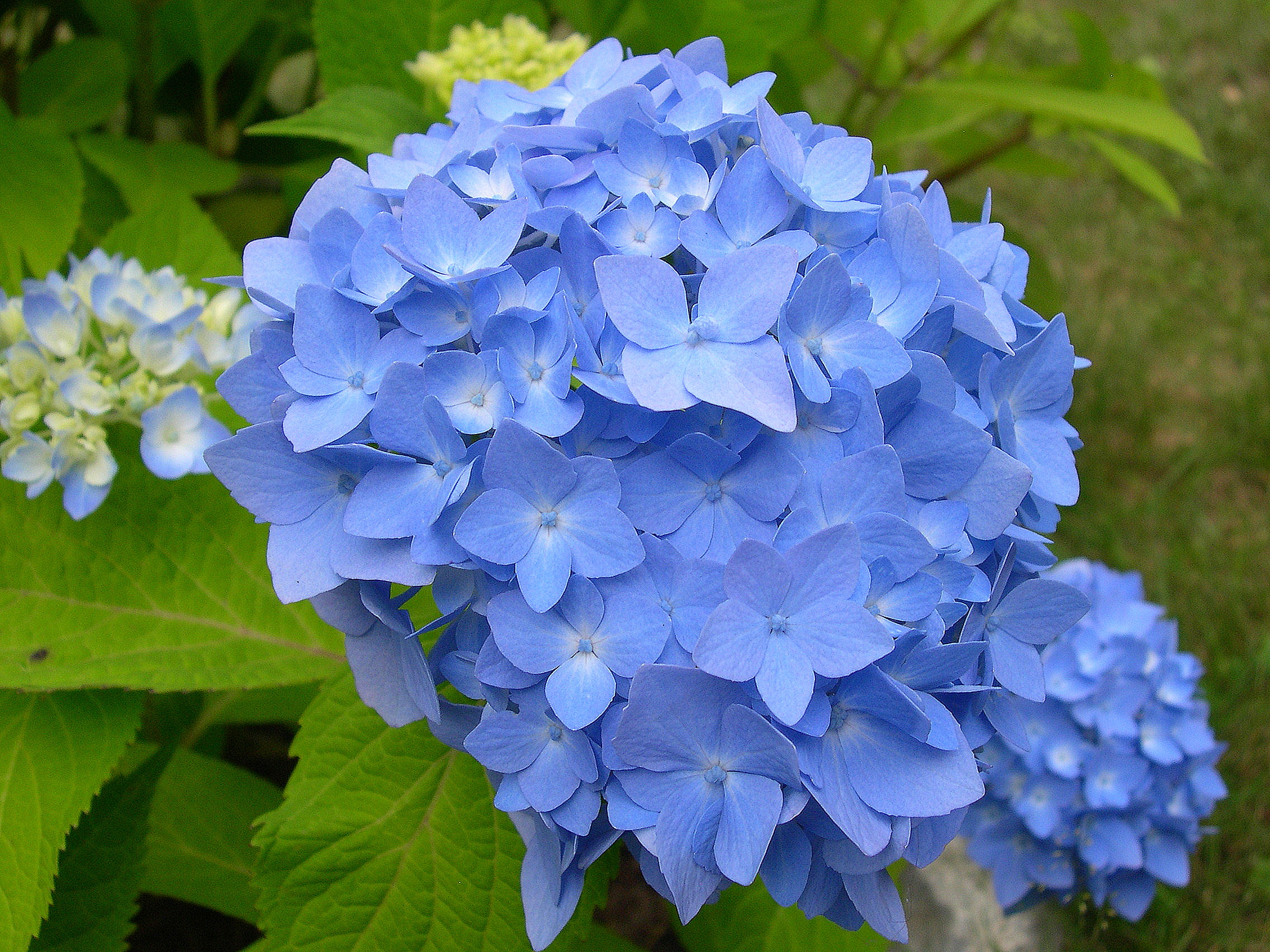 List Of Blue Flowers Names 10 Cool Hd Wallpaper