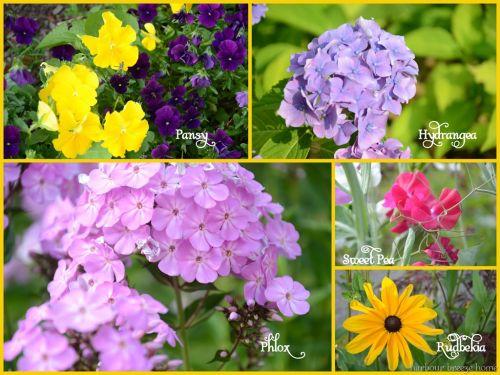 List Of Blue Flowers Names 15 Free Wallpaper