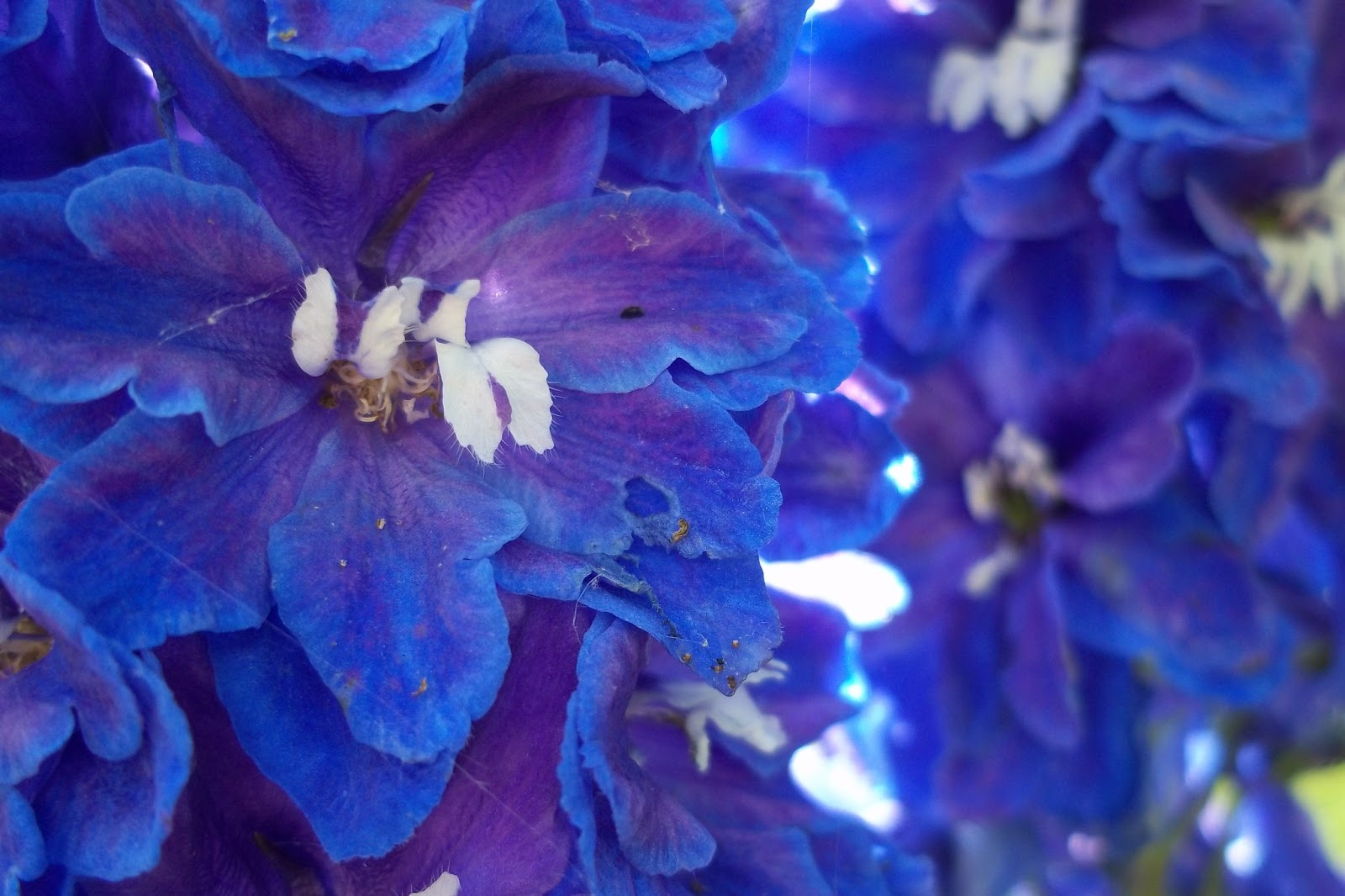 List of blue flowers names 16 background hdflowerwallpaper list of blue flowers names widescreen wallpaper izmirmasajfo Gallery