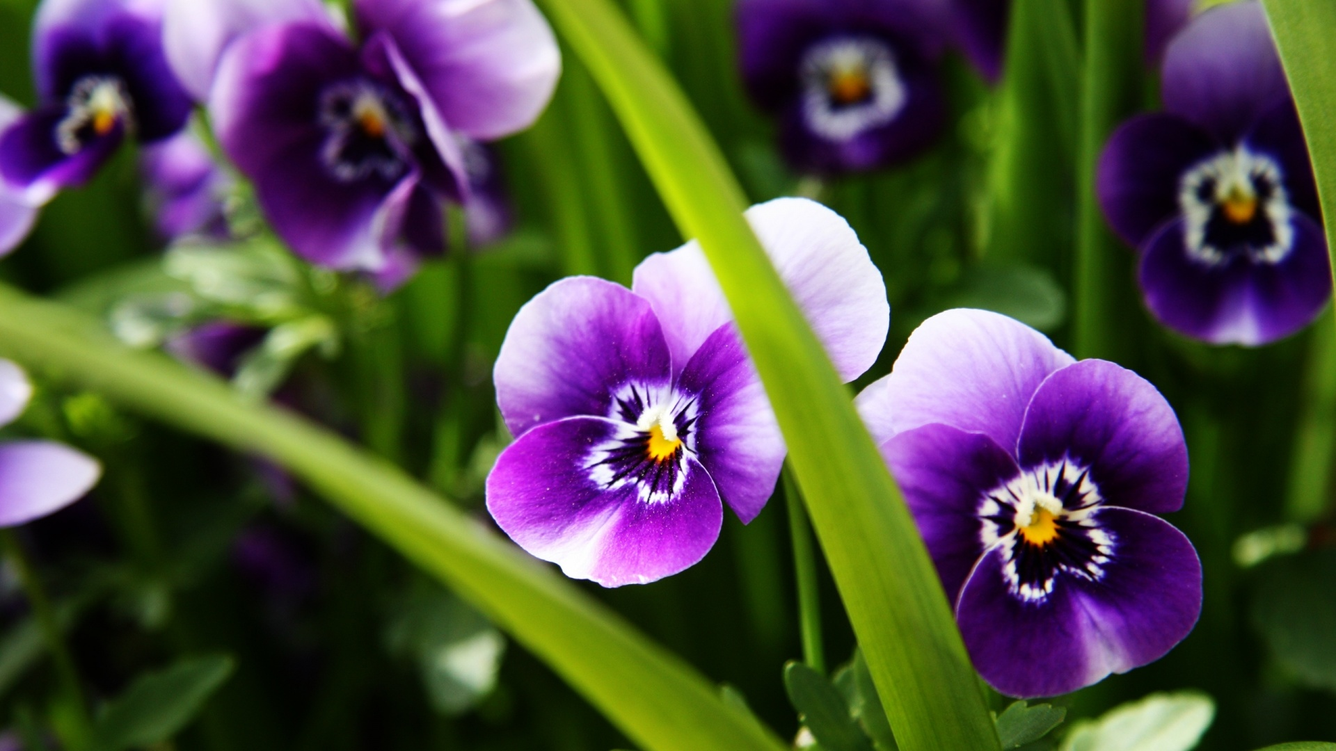 Names of purple flowers with pictures 1 widescreen wallpaper names of purple flowers with pictures widescreen wallpaper mightylinksfo