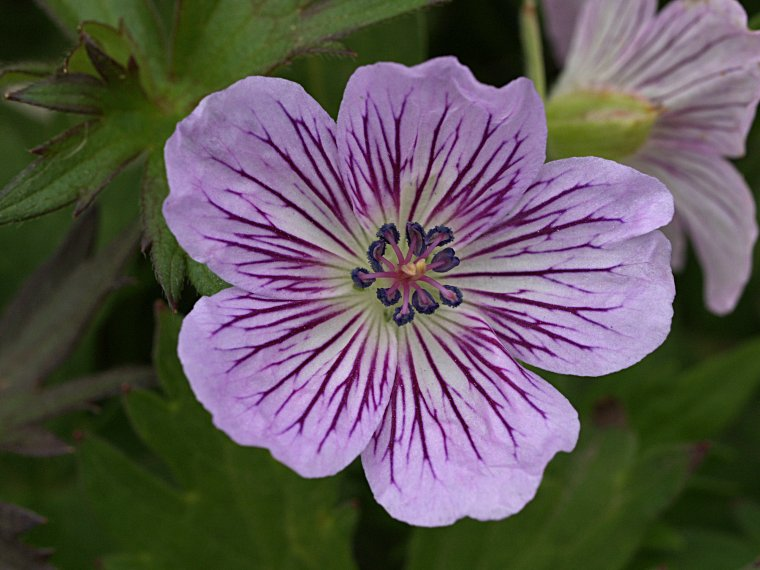 Names Of Purple Flowers With Pictures 27 Cool Hd Wallpaper