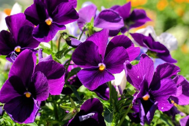 Names of purple flowers with pictures 5 desktop background names of purple flowers with pictures wide wallpaper mightylinksfo Choice Image
