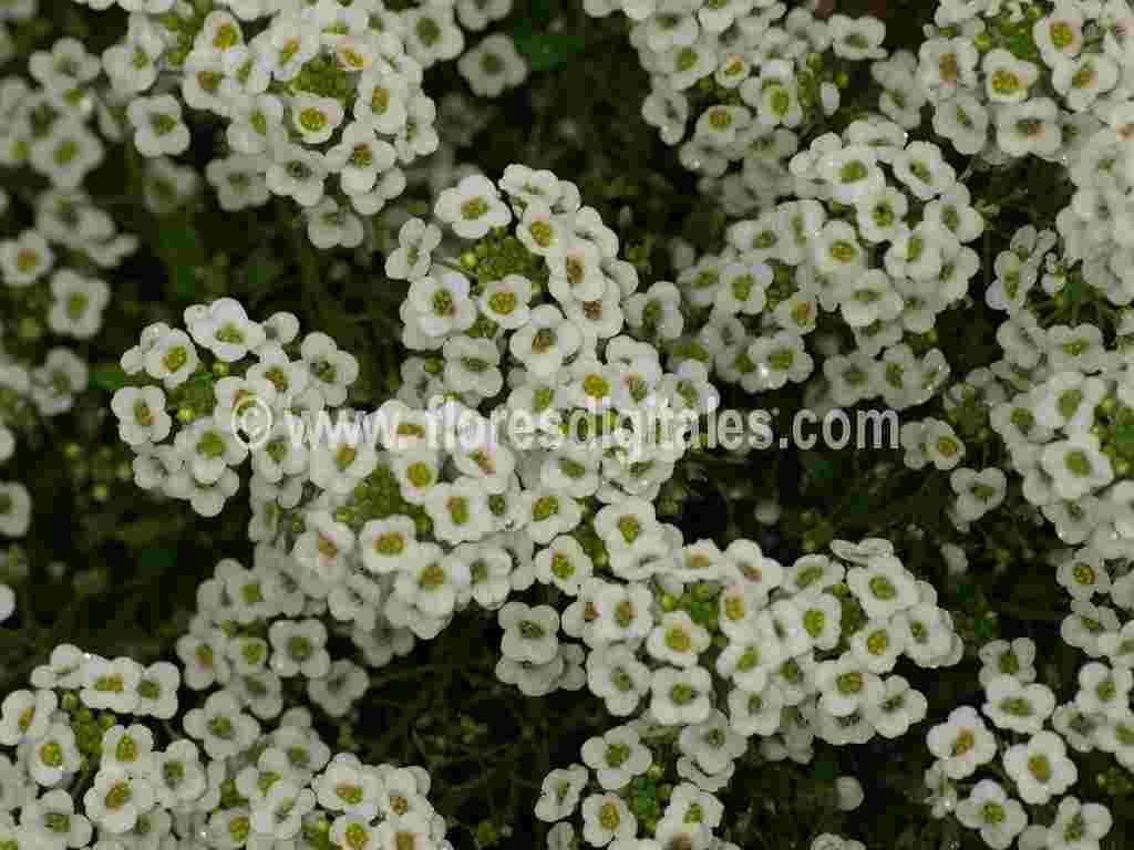 Names Of White Flowers 1 Background