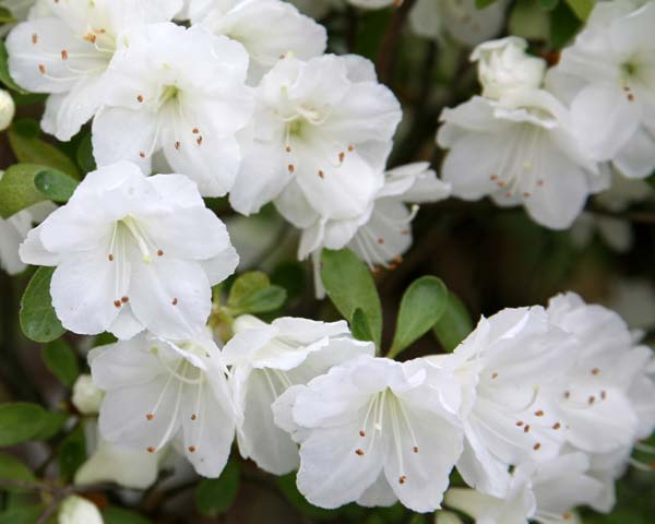 Images of white flowers with names my web value names of white flowers background mightylinksfo